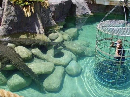 Perierga.gr - Κολυμπώντας με τους κροκόδειλους!