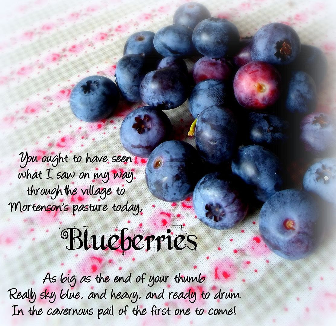 photo Blueberries_zpsae2e1eba.jpg