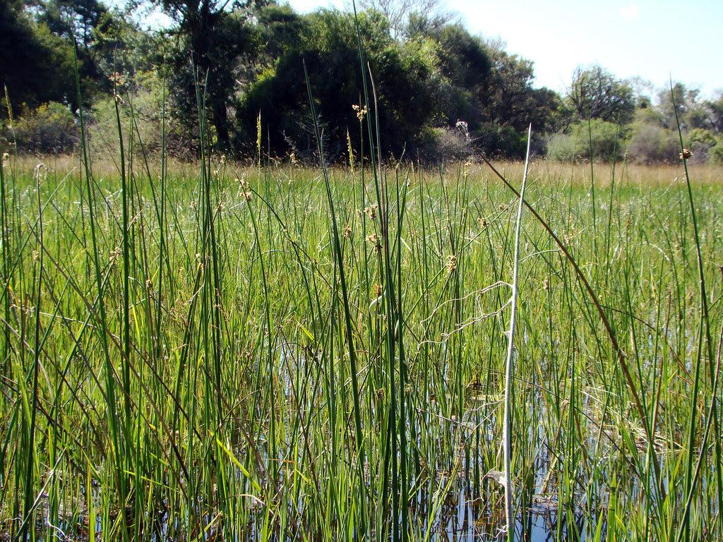 DSC08911 snake in the grass