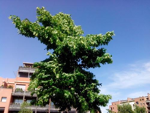 L'albero alla forma di un ucello che vola by Ylbert Durishti