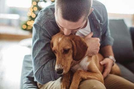 Perros con excesivo apego, como trabajar con ellos