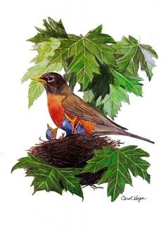 Flying Bird Drawing With Colour Drawing Art Ideas