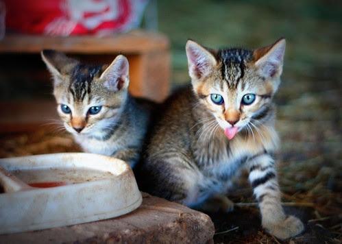 New Kitties