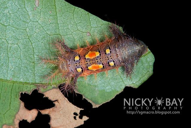 Caterpillar - DSC_9336