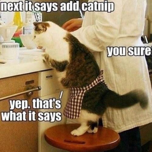 don't argue with me, human! #chef #cat #catnip