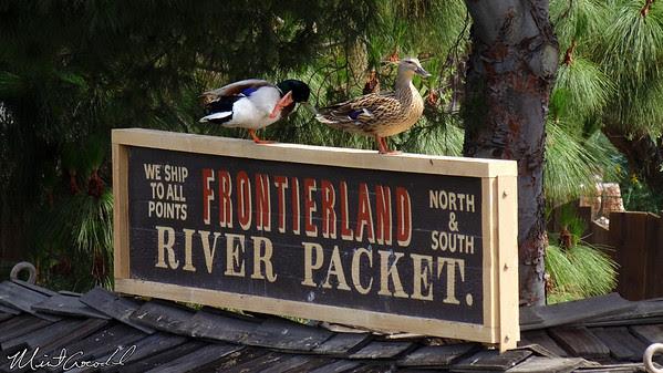 Disneyland Resort, Disneyland, Frontierland, Ducks