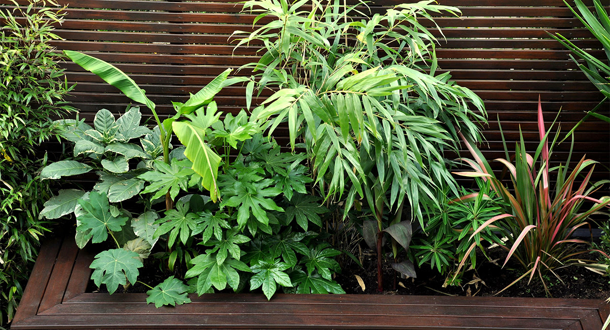 Tropical Garden Ideas In London