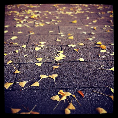 Dead leaves covering the ground. A little melancholic?
