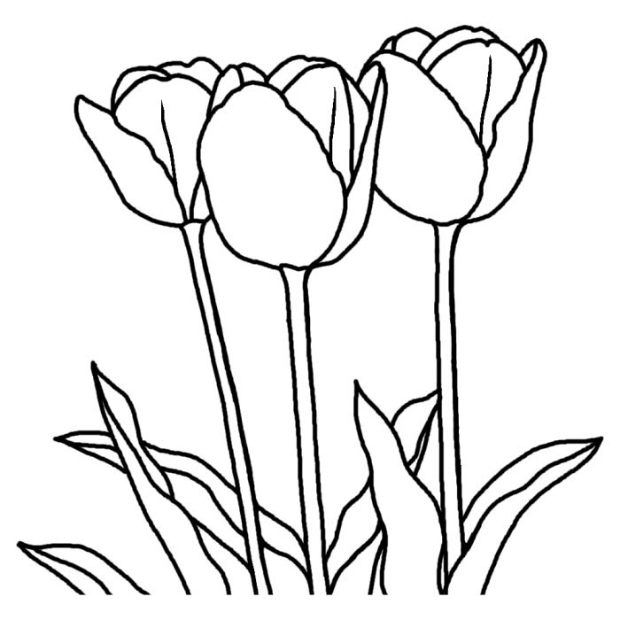 塗り絵 無料 花