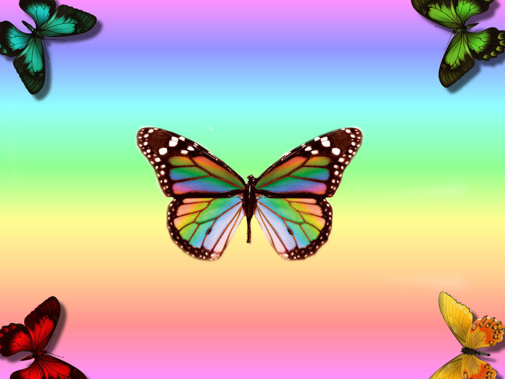 23 Best Colorful And Free Butterfly Wallpapers