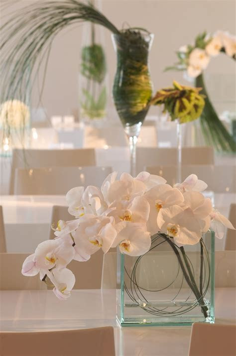 17 Best images about Phalaenopsis orchids arrangements on