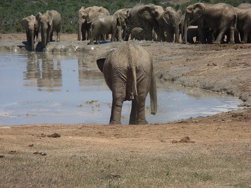 Sydafrika feb 2007 210