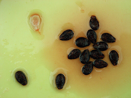 lifebuzz-9424b5e6f2bdfd6741add2168e675071-limit_2000