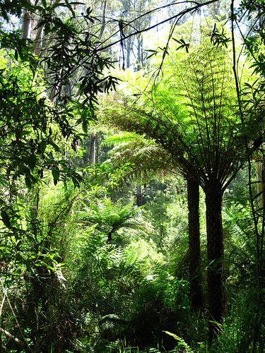 Katoomba, Blue Mountains, #Australia
