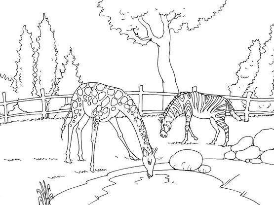Coloriage Zoo 15 Coloriage Zoo Coloriage Animaux Coloriage Animaux