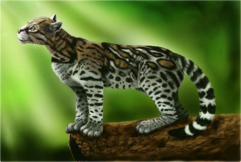 Ocelot   Facts, Pictures, Diet, Habitat, Breeding, Appearance, Lifespan, Characteristics