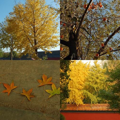 Beijing in the Fall