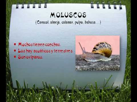 Sistema digestivo de animales invertebrados