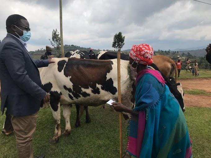 Bahawe inka bazibonamo urufunguzo rw'ubukire, abapfakazi banazibonamo abaraza #Rwanda #RwOT via @kigalitoday #rwanda #RwOT