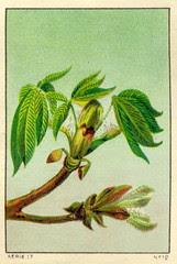 feuilles 12