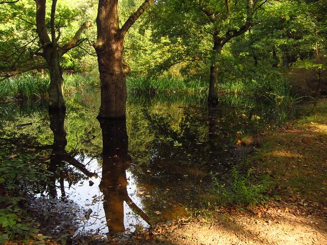 Sandy Heath Ponds
