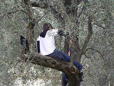 dans les oliviers.jpg