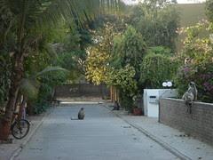 neighborhood primates
