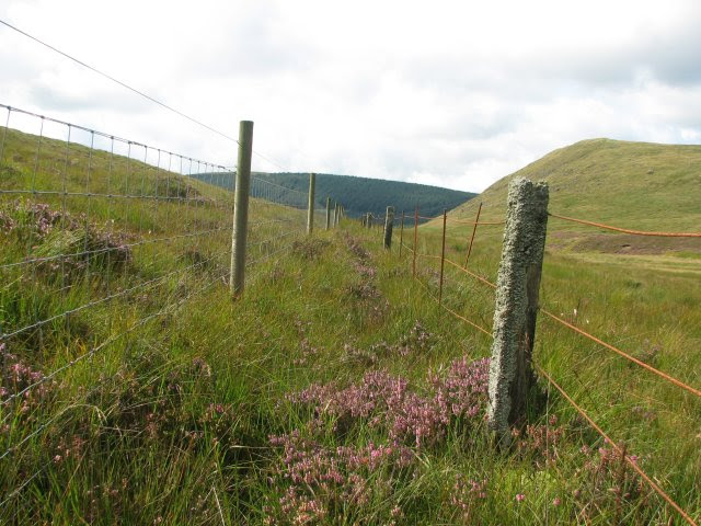 http://upload.wikimedia.org/wikipedia/commons/5/5c/Fences_old_and_new_-_geograph.org.uk_-_943880.jpg