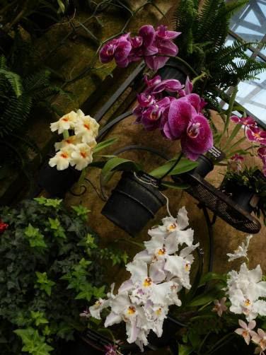 coleção de orquídeas no Longwood Gardens, na Pennsylvania - Estados Unidos