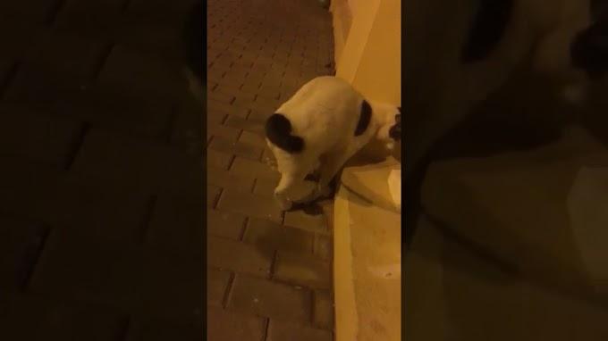 Gato muy manso, encontrado en Telde