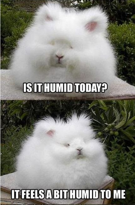 Bunny is humid. Puffed up fur.