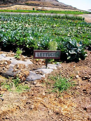 Tanaka Farms Cookout Tour