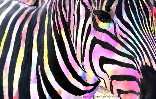 Download 86+ Wallpaper Tumblr Zebra HD Terbaru