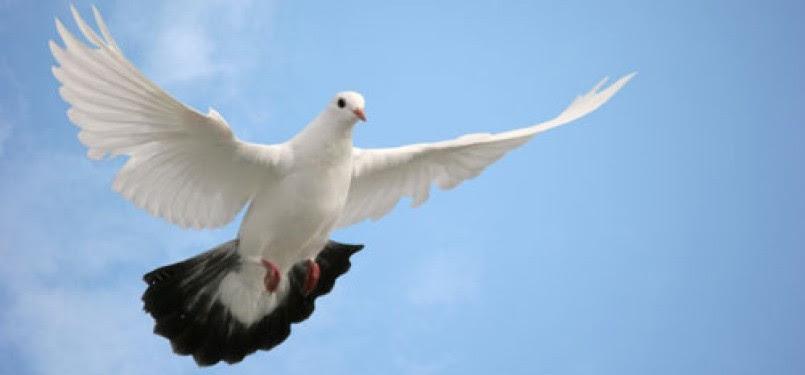 Seekor Burung Mati di Singapura...Warga Sibuk Pasang ...