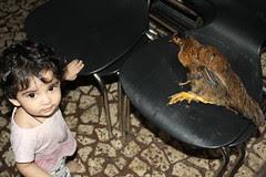 I Bring Desi Murgi Home by firoze shakir photographerno1