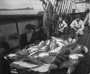 Fishing boat, cod and halibut, Alaska