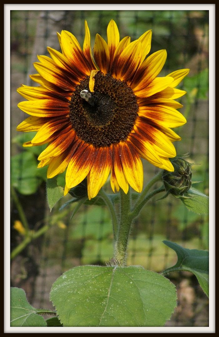 by Angie Ouellette-Tower for http://www.godsgrowinggarden.com/ photo DSCF9044_zpsut6lho0y.jpg