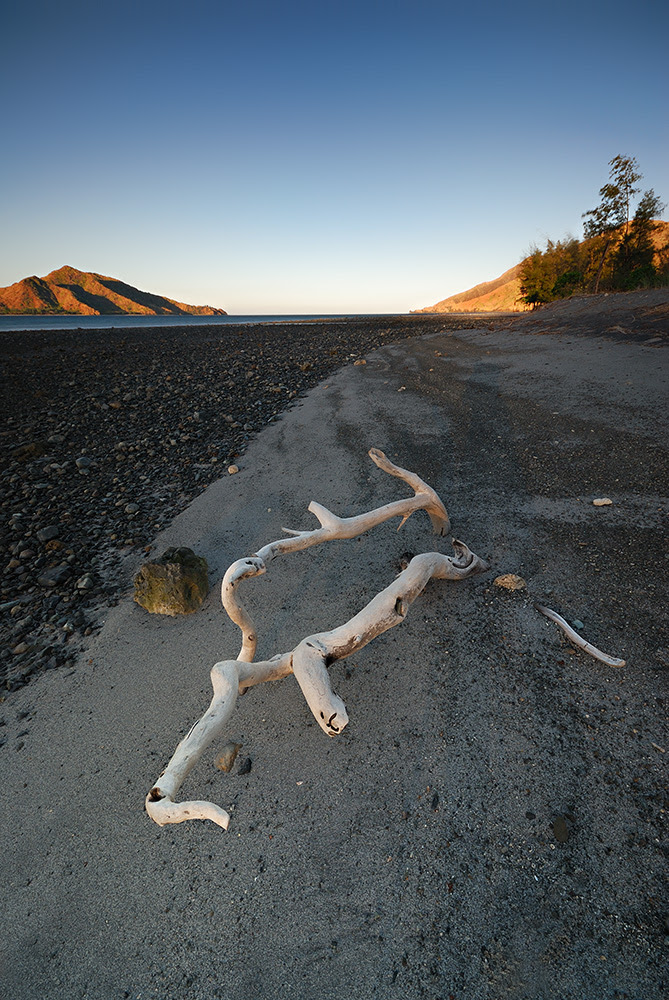 Morning Driftwood