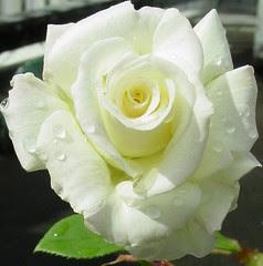 Significado Color Blanco