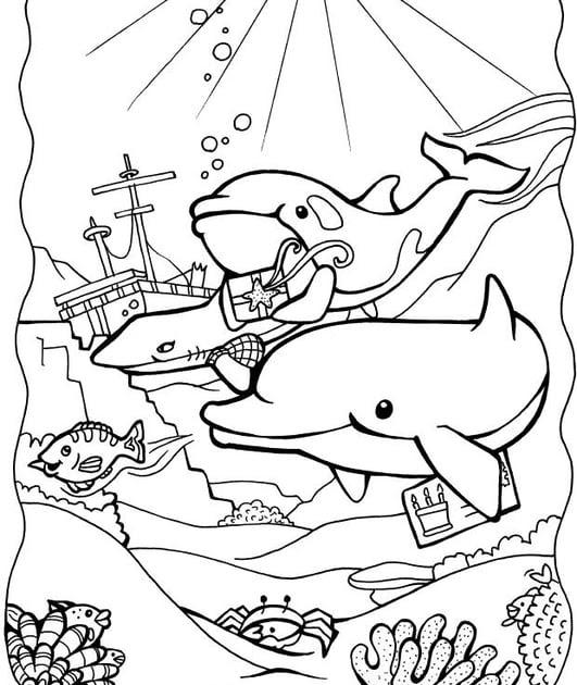 malvorlagen delphine ausdrucken