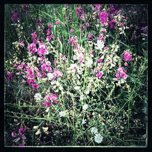 Flowers along the Springwater Corridor Trail