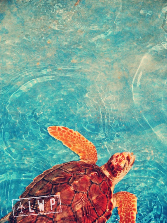 Out For a Swim, Turtle Sanctuary, Animal Child's Room Wall 9x12 Fine Art Photography