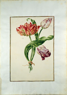 Karlsruher Tulpenbuch a