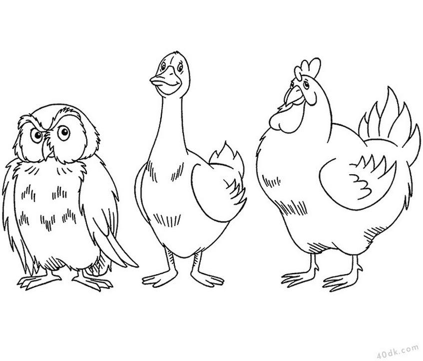40dkcom Baykuş Kaz Tavuk Boyama Sayfası 113 40dk Eğitim