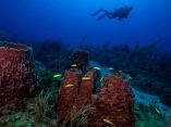 Cuba's Twilight Zone Reefs and Their Regional Connectivity