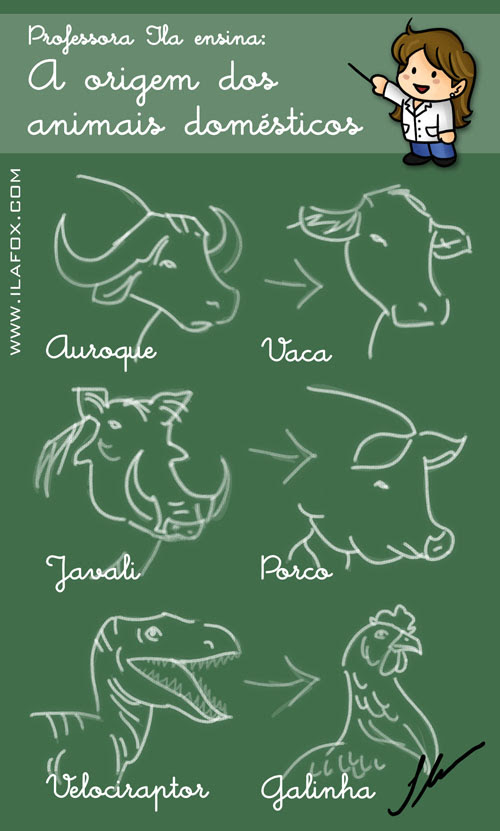 a origem dos animais domésticos: auroque - vaca, javali - porco, velociraptor - galinha