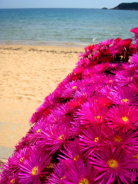 Flowers by the beach