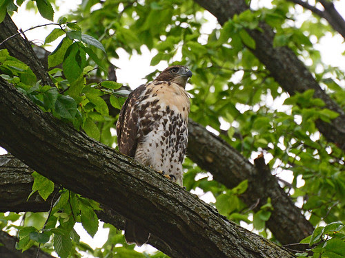 RT Fledge on Morningside Drive
