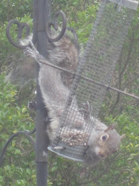 squirrel antics (13)