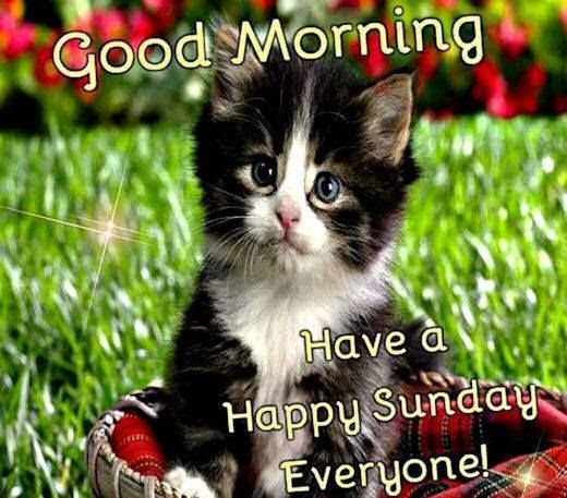 Good Morning Have A Happy Sunday Everyone Pictures Photos And